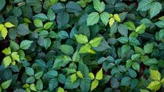 Remove Poison Ivy In 5 Steps: No Herbicides Required  http://www.rodalesorganiclife.com/home/remove-poison-ivy-5-steps-no-herbicides-required?utm_source=rodalesorganiclife.com