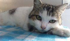 Morto dopo giorni di agonia Rocco, il gatto mascotte del Museo del Grano di Ortacesus