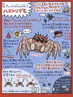 Water Animals, Animals And Pets, Japanese Animals, Hiragana, Monster Design, Weird Creatures, All About Cats, Pretty Birds, Zoology