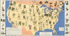 Amazing 1930's Pharmacist Map of 'Herbal Cures' Released to Public | Slate just released a map of 'Herbal Cures' from the depression era.