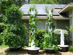 The best way to grow a salad in your backyard!  I am going to do this!