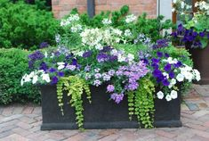 You Plant Flowers On Mother s Day Petunias: white, lavender, deep purple. Plant choice could be used to create an annual border. Placing container plants against an evergreen hedge makes it look Flower Garden, Plants, Garden, Plant Combinations, Small Space Gardening, Summer Planter, Container Gardening, Container Gardening Flowers, Garden Landscaping
