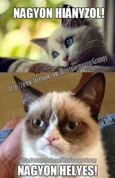 """Képtalálat a következőre: """"grumpy cat nagyon hiányzol"""""""