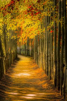 Heavenly Stroll by Robin Stevens on Beautiful Places To Visit, Beautiful World, Cool Photos, Beautiful Pictures, Tree Tunnel, Fall Pictures, Amazing Nature, Nature Photos, Beautiful Landscapes