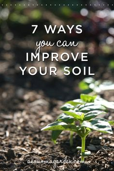 We've been thinking a lot about dirt lately. Or, rather 'soil' as we gardeners like to say. We've been thinking about weeds and learning about how you can tell a lot about your soil by what weeds g...