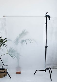 1/4 diffusion backdrop for outdoor portraits (hazy background - eternal sunshine ref))