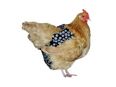 Pampered Poultry: Pet Chicken Diapers #IncredibleThings