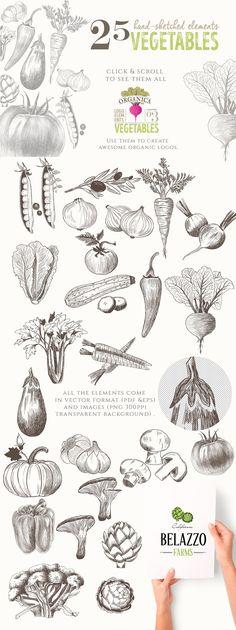 ORGANIC LOGO ELEMENTS – VEGETABLES by Friendly Label on @creativemarket logo, organic, vegetables, hand-sketched, hand-drawn, vector, illustrations, graphics, beet, carrot, olive, tomato, onion, radish, peas, lettuce, zucchini, chili, celery, eggplant, garlic, mushrooms, broccoli, artichoke