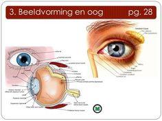 3. Beeldvorming en oog pg. 28. 3.1.1 beschermende delen 3. Beeldvorming en oog pg. 28 1)Wenkbrauw 2) Traanklier 3) Wimpers 4) Bovenste ooglid 5) Traankanaaltje.
