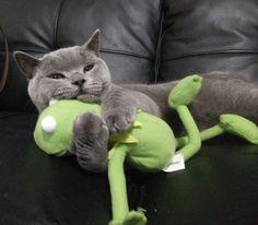 me loves kermie..