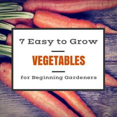 Want to grow some of your own vegetables but don't know where to start? Check out these 7 easy to grow vegetables that are perfect for newbie gardeners.