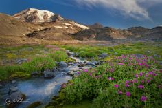 Rock Garden by Gary Luhm on 500px