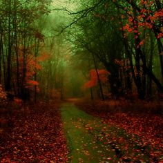 """A Walk in Autumn - """"Nature photography"""" – Rare Selection Gallery, Part IV Autumn Nature, All Nature, Beautiful World, Beautiful Places, Beautiful Pictures, Foto Nature, Ipad Air Wallpaper, Belleza Natural, Pics Art"""
