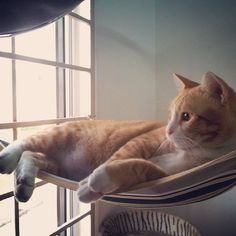 Cat hammock :)) 14 Purr-Fect DIY Projects for Cat People Diy Cat Hammock, Diy Cat Bed, Cat Empire, Homemade Cat Toys, Animal Projects, Diy Projects, Cat People, Crazy Cats, Cats And Kittens