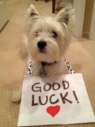 Good Luck Animal
