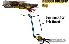 How to Rig the Hopper dropper using chernobyl ants and multiple nymphs. This is a great technique even during the salmon fly and golden stone hatch. Salmon Flies, Fishing Videos, Nymphs, Chernobyl, Fly Tying, Ants, Fly Fishing, Montages, Stone