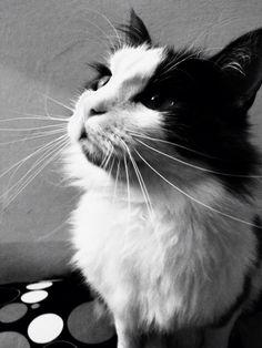#lovely #cat #lovecat #animals