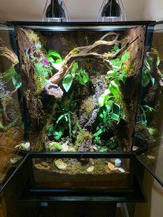 Reptile Room, Reptile Cage, Reptile Pets, Chameleon Enclosure, Reptile Enclosure, Tree Frog Terrarium, Terrarium Ideas, Crested Gecko Vivarium, Leopard Gecko Terrarium