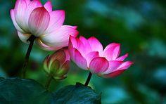 sikap kedermawanan buddhis share by tisaranaDotNet