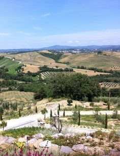 View from Michael's veranda....note the vineyards they produce the best wine in the world!