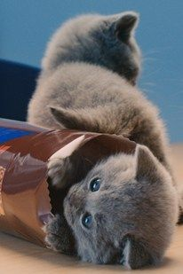 Biscuits and cute kittens are two of our favourite things - Have you seen the new McVities advert?