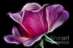 LIGHTNING ROSE -   Prints & Greeting Cards available at:  http://kaye-menner.artistwebsites.com/featured/lightning-rose-kaye-menner.html  -