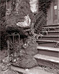 TREE-NYC-Brownstone-matt-weber