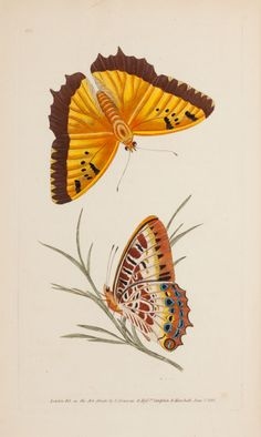 Fine Art - Work on Paper:Print, A SET OF SIX FRAMED ENGLISH HAND COLORED ENGRAVINGS OF BUTTERFLIESAFTER DONOVAN . Edward Donovan (British, 1...