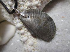 Genuine Lake Erie Brachiopod, Fossil Necklace