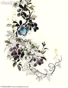 blackberries drawing | Butterflies on blackberry bush [11500006] > Stock Photos | Royalty ...
