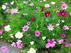 Die 20 Besten Bilder Von Blumen Florals English Roses Und