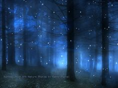 "Nature Photography, Surreal Haunting Blue Woodlands, Blue, Fog, Stars, Trees, Surreal Fine Art Nature Photograph 9"" x 12"". $30.00, via Etsy."