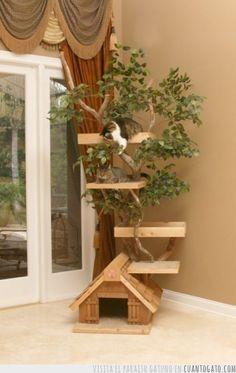 La casa del árbol, versión felina