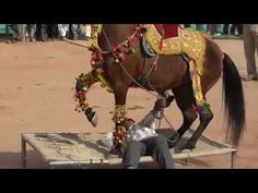 Camel and Horse Dancing at The Yearly Nagaur Cattle Fair in Rajasthan, India - YouTube