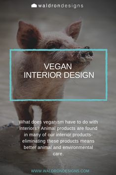 What does veganism have to do with interiors? Check out our blog to find out how to protect animals beyond the dinner plate and into the home. What Is Interior Design, Leather Wall Panels, Silk Drapes, Wool Carpet, Veganism, Leather Sofa, Design Process, How To Find Out, Plate