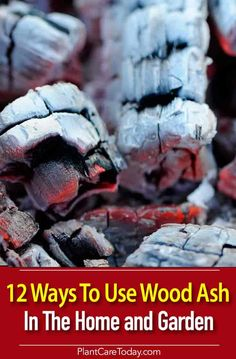 Luxury Garden Design 12 uses for wood ash in the garden and the home, help balance soil pH, deter slugs and snails, provide calcium for veggies, fertilize lawn [DETAILS] Vegetable Garden Planning, Vegetable Garden Design, Garden Pests, Garden Fertilizers, Vegetable Gardening, Gardening For Beginners, Gardening Tips, Lawn Fertilizer, Soil Ph
