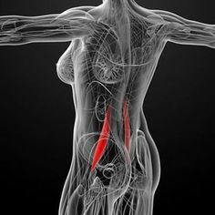 The psoas muscle may be the most important muscle in your body. Read on to find out whether you might have a psoas muscle imbalance, and how to correct it.