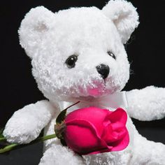 white teddy bear with rose hd wallpaper