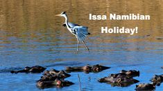 17 travel meme-gifs telling you it's time for a holiday in Namibia? Meme Gifs, Budget Travel, Family Travel, Told You So, Couple, Times, Vacation, How To Plan, Friends
