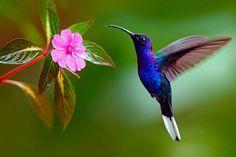 Cuando en un jardín aparece un colibrí, nos viene a contar que las almas de los que amamos están bien.