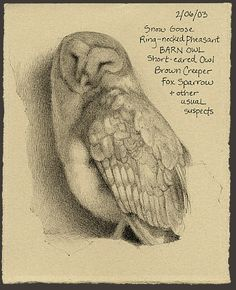 barn owl Catherine Hamilton