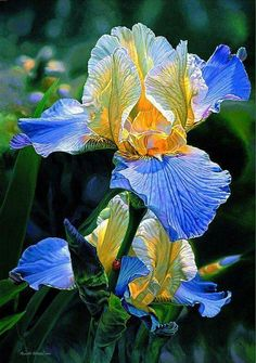 Watercolor Painting Art of Russell Cobane purple iris Iris Painting, Oil Painting Flowers, Watercolor Flowers, Watercolor Paintings, Watercolors, Abstract Paintings, Art Paintings, Landscape Paintings, Abstract Art