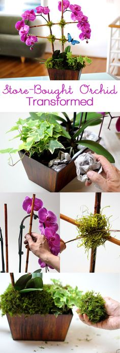 Transform a store-bought orchid into a beautiful arrangement that would stun your florist! #DIY