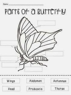 Worksheets Insect Body Parts Worksheet insects worksheets free homeschool helper onlines label activity 1 students cut out the parts of a butterfly and paste in appropriate space 2 match part a