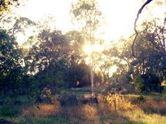 Tenterfield Park in morning