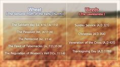 See The true church Teachings vs. The false church Teachings. Parable of the weeds and wheat in the bible.