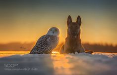 Sunset by TanjaBrandt #animals #animal #pet #pets #animales #animallovers #photooftheday #amazing #picoftheday