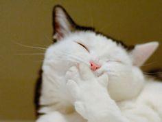 Voici les 15 chats les plus souriants d'internet