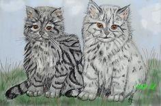 silvershaded cats