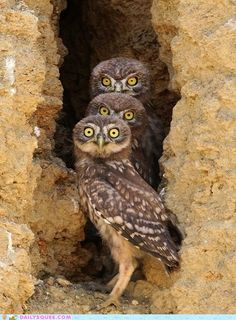 Animals have their own funny side, and here in funny animal picdump of the day - 366 you will find 27 funny animal pictures. Beautiful Owl, Animals Beautiful, Animals Amazing, Beautiful Pictures, Owl Bird, Pet Birds, Funny Animals, Cute Animals, Burrowing Owl